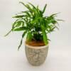 Indoor fern v2 scaled