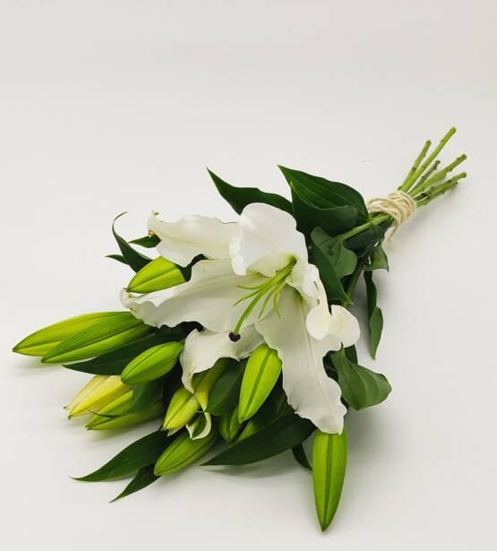 Oriental lilies 3